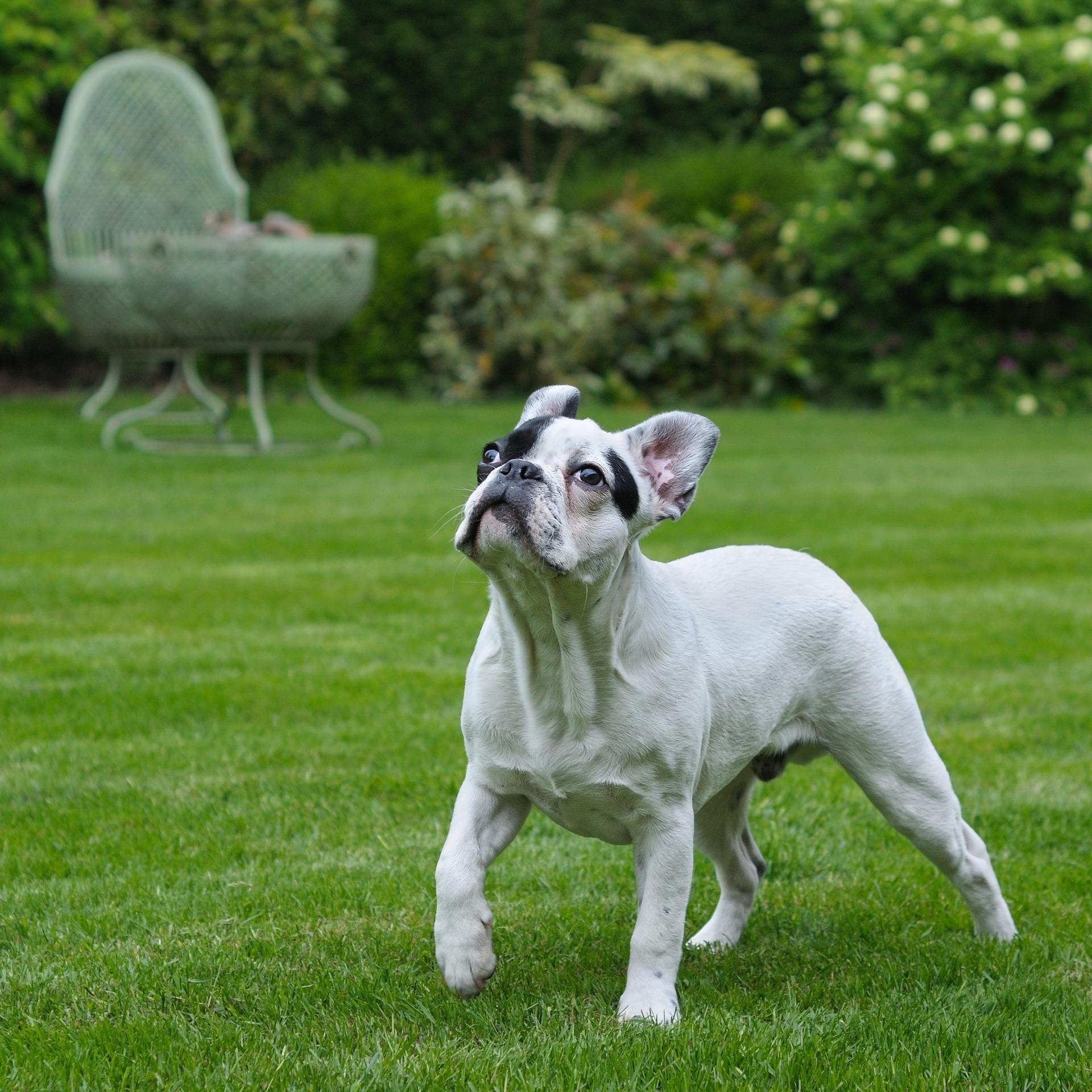 bulldog-training-for-credit-repair.jpg